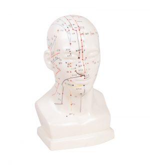 Chinesischer Akupunkturkopf