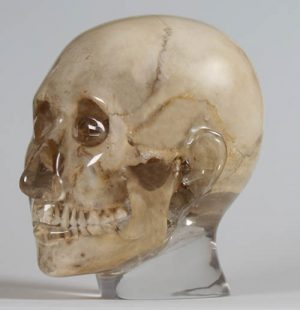 Röntgenphantom Kopf, transparent