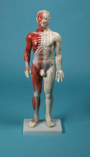 Chinesische Akupunkturfigur, 60 cm