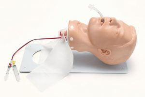 Deluxe Airway Management Trainer mit Gestell Erwachsener