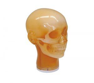 Dental Röntgen-Phantomkopf, geschlossener Kiefer